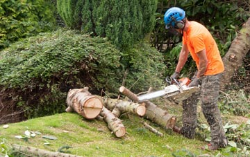 additional services offered by Bangor tree surgeons