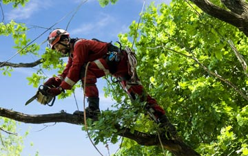 find trusted rated Bangor tree surgeons