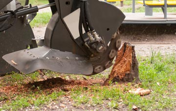 professional Bangor stump grinding services