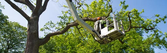 Bangor tree surgery services
