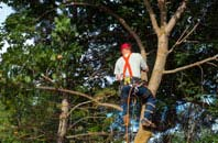 Bangor tree crown reduction services